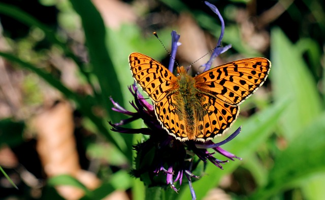 The Significance of Butterflies